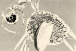 Gyapjúval hímzett dohányzacskó (19. sz. második fele) Kiskunhalas, Torma János Múzeum