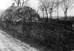 Vesszőből font kerítés (Adorján, v. Bács-Bodrog m., 1972)